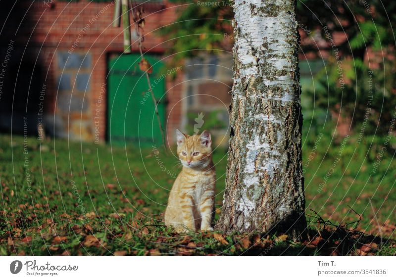 Roter Rudi rudi Kater rot Cat Bauernhof Katze wildlife cat Hauskatze Fell getigert Farbfoto Tier schurrhaare Profil Auge mietzi Nase grün kitten Schnurrhaar