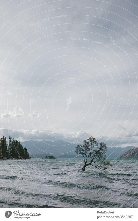 #As# Lake Wanaka Neuseeland Neuseeland Landschaft Sehenswürdigkeit See Seeufer Baum Natur Außenaufnahme Berge u. Gebirge Farbfoto Wasser Umwelt