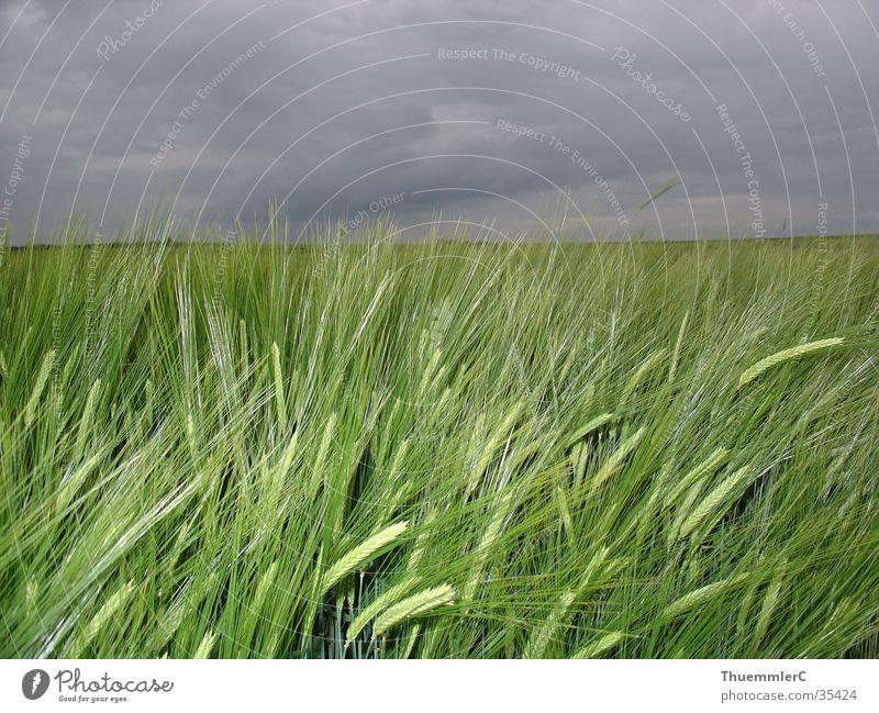 Weizen und Wolken Stimmung Wetter Korn Kulturlandschaft