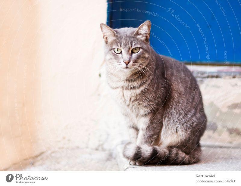 Kontakt Tier Katze Tiergesicht Fell 1 schön Straßenkatze Istanbul Farbfoto Außenaufnahme Textfreiraum links Tierporträt Blick
