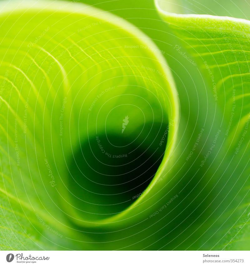 grünes Licht Sommer Umwelt Natur Landschaft Klima Wetter Schönes Wetter Pflanze Blume Blatt Grünpflanze exotisch Garten Park Wiese Linie Drehung Farbfoto