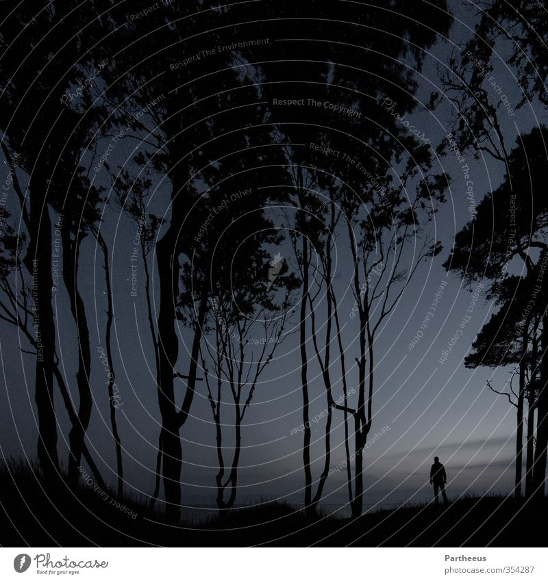 alone in the dark Mensch Himmel Natur Mann Jugendliche Baum Landschaft Erholung ruhig Strand Wald Erwachsene Junger Mann 18-30 Jahre Küste Denken
