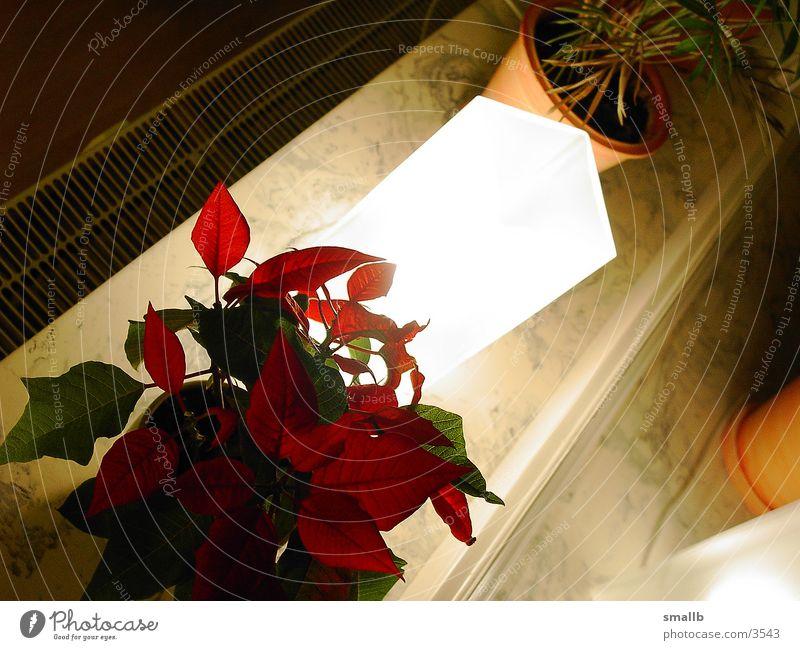 shining flower 001 Licht Blume strahlend Abend Häusliches Leben