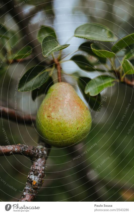Nahaufnahme Birne im Baum Frucht Bioprodukte Farbfoto Gesunde Ernährung frisch Vegetarische Ernährung Lebensmittel Gesundheit Foodfotografie lecker Diät Vitamin