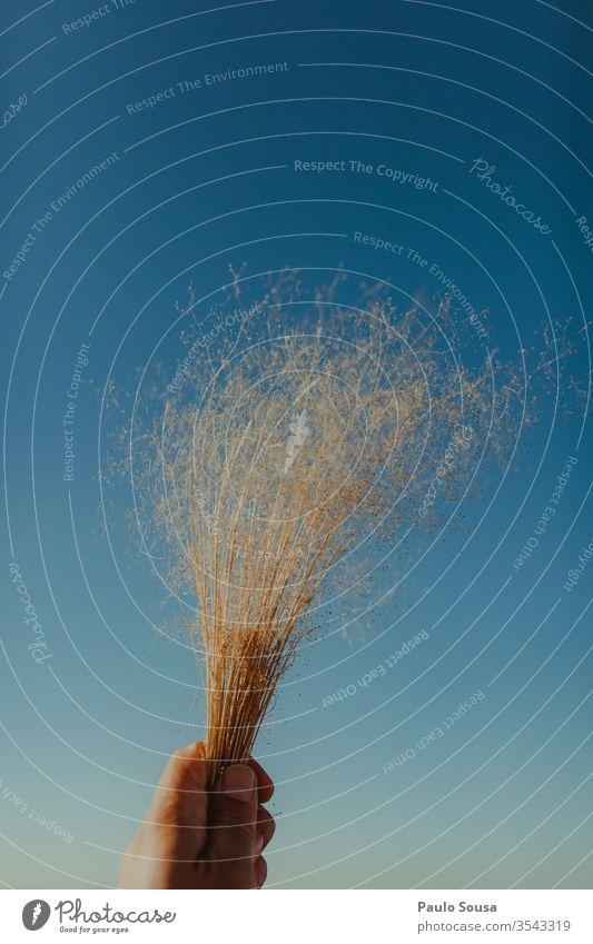Abgehackte Hand einer Person, die eine trockene Pflanze gegen den blauen Himmel hält Beteiligung Halt Hintergrund Hände Frau weiß Mädchen Frühling Blume