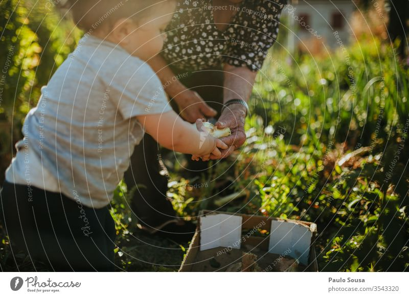 Gartenarbeit von Kindern und Großmüttern Generation Großmutter Familie & Verwandtschaft Zusammensein Zusammengehörigkeitsgefühl Enkel Glück Lifestyle