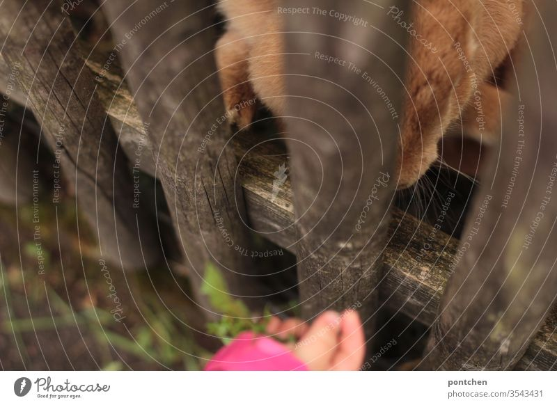 Tierliebe. Kleinkind füttert Hasen durch einen Gartenzaun mit Löwenzahn. Tierhaltung, Haustier. Riesenkaninchen. Füttern hase kinderhand tierliebe futter