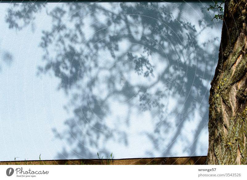 Schatten von Ästen und Zweigen auf einer Hauswand Licht und Schatten Äste und Zweige Baum Baumstamm Baumschatten Sommer Außenaufnahme Menschenleer