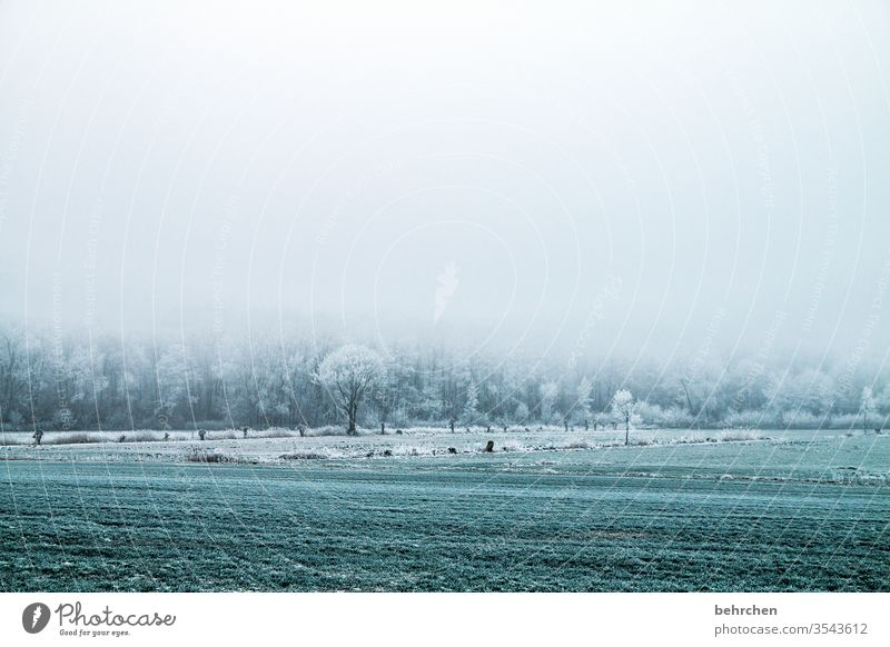 innehalten Winterwald Winterstimmung Deutschland Heimat Acker Landwirtschaft geheimnisvoll Winterspaziergang Wintertag Märchenhaft Märchenwald wolkenverhangen