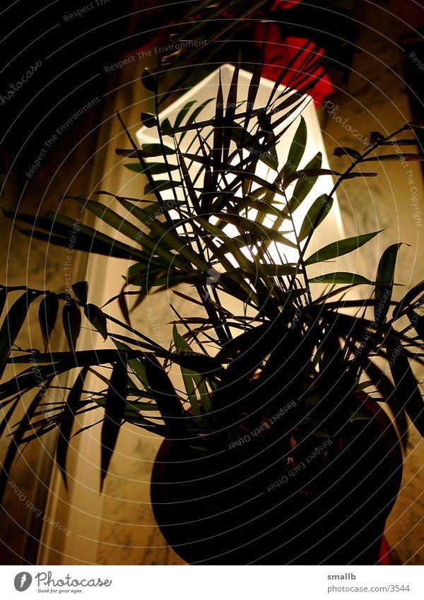 shining flower 002 Licht Blume strahlend Abend Häusliches Leben