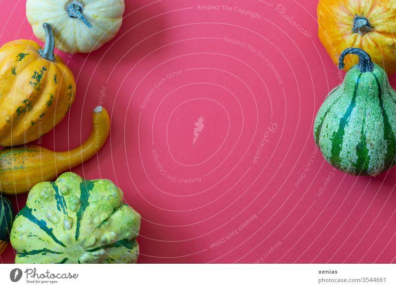 gelbe, orange und grüne Zierkürbisse auf rotem Grund mit Textfreiraum Kürbis Schatten Herbst Dekoration & Verzierung Erntedankfest saisonbedingt Jahreszeiten