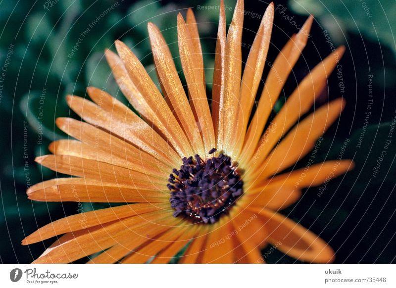 Blütenfeinheiten Blume Garten Blütenblatt schimmern