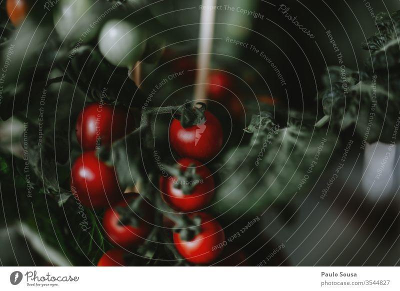 Topf Tomatenpflanze mit Früchten eingetopft Bioprodukte organisch rot Gemüse grün Nahaufnahme Gesunde Ernährung Tag Menschenleer Innenaufnahme natürlich Pflanze