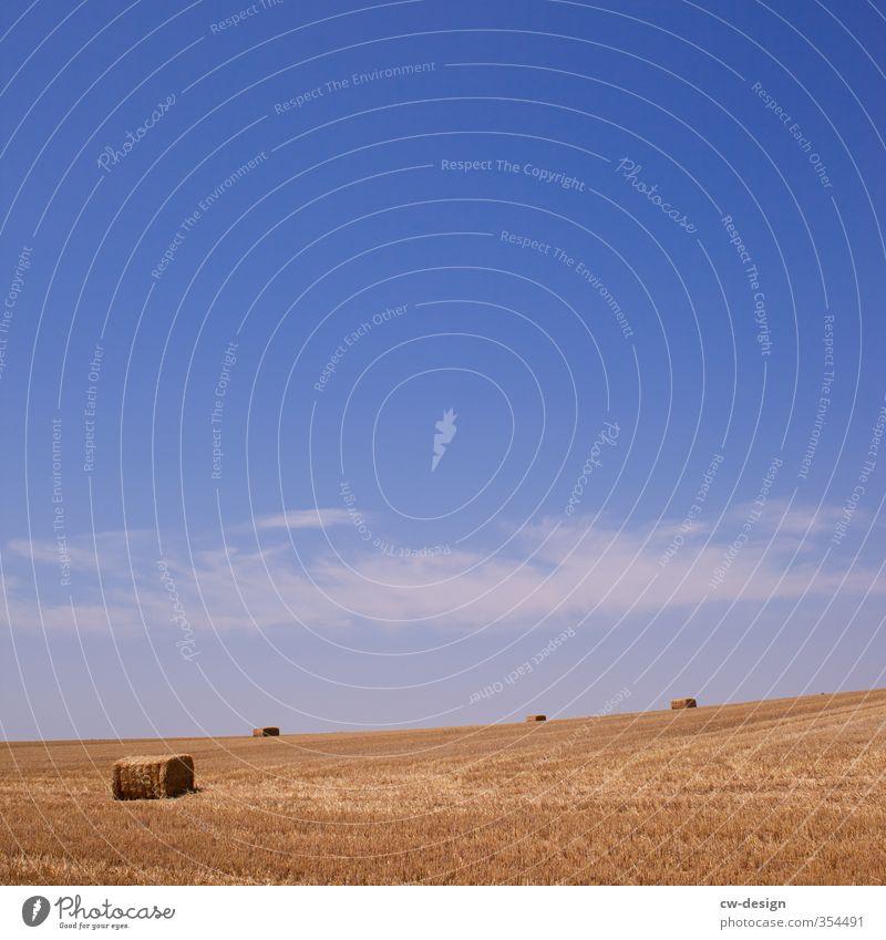 Einbringen landwirtschaftlicher Gewächse und Früchte Natur Landschaft Pflanze Himmel Sommer Schönes Wetter Nutzpflanze Feld Ernte Ackerbau Landwirtschaft