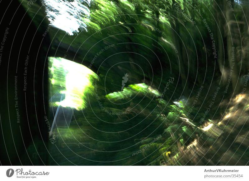 rasante Zugfahrt Baum grün Wald Verkehr Eisenbahn Geschwindigkeit Brücke Gleise