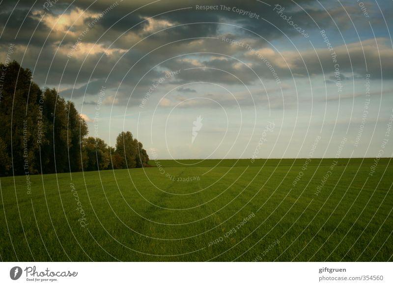 auf weiter flur Umwelt Natur Landschaft Urelemente Erde Himmel Wolken Gewitterwolken Sonne Sonnenlicht Wetter Unwetter Pflanze Baum Gras Wiese Wald Stimmung