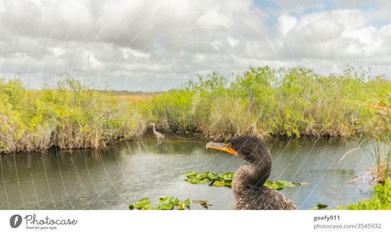 #600 Fernblick Vogel Tier Natur Farbfoto Außenaufnahme Wildtier Tierporträt Umwelt Tiergesicht Schnabel Flügel Everglades NP Florida Feder Auge Nahaufnahme