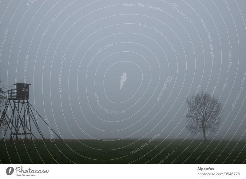 unter Beobachtung Hochsitz Nebel Außenaufnahme Menschenleer Herbst Natur Landschaft grau neblig Neblige Landschaft nebliger Morgen Baum Wetter Wiese