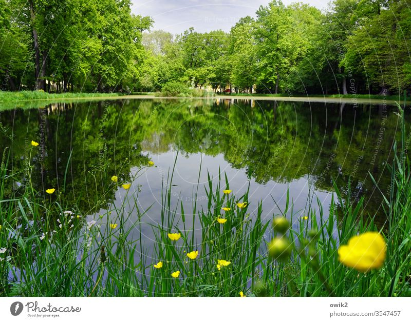 Gelbe Tupfer See Teich Park Seeufer Gras Blumen Butterblumen grün gelb blau Wasser Wasseroberfläche windstill Spiegelbild Reflexion & Spiegelung Wasserspiegel