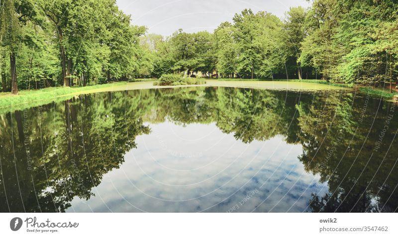 Gläsern Teich Park See Seeufer Wasser Wasserspiegelung Reflexion & Spiegelung Menschenleer Außenaufnahme Farbfoto Natur Tag Wasseroberfläche Baum Umwelt