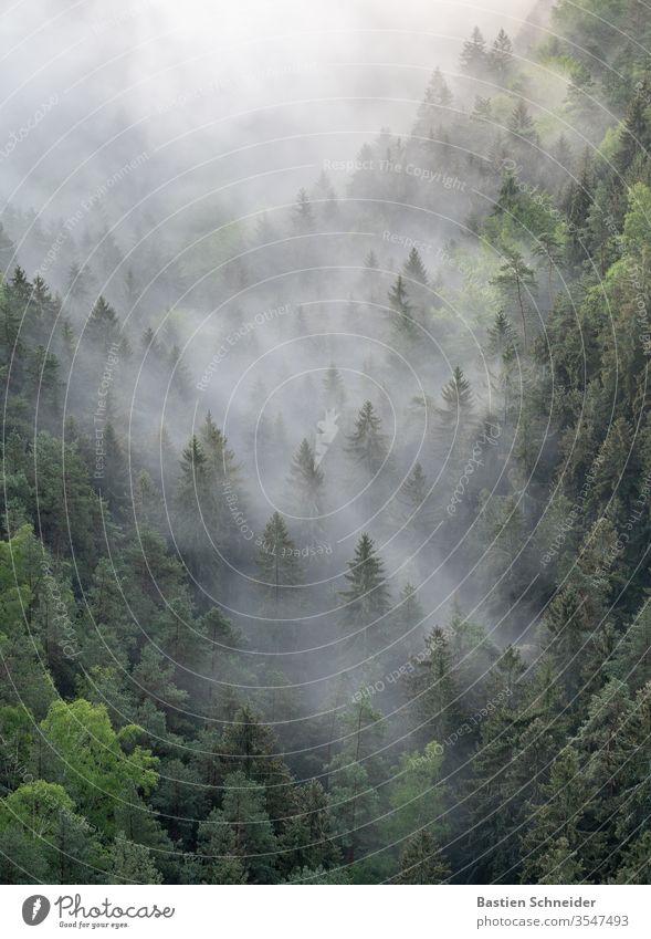 Nebliger Wald im Elbsandsteingebirge Nebel Sachsen Sächsische Schweiz wandern Außenaufnahme Rathen Baum Natur Berge u. Gebirge Landschaft Sonne Morgen