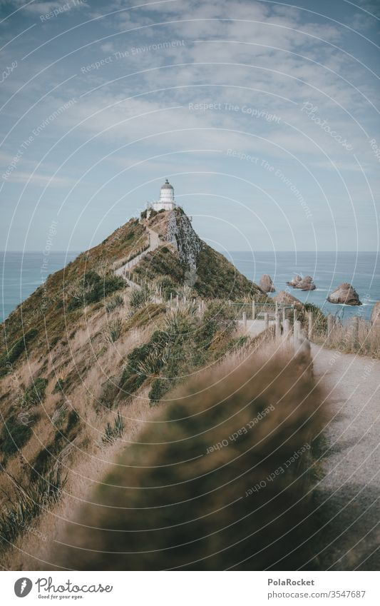 #As# TurmBlick Leuchtturm Leuchtturm-Strand Neuseeland Neuseeland Landschaft Wege & Pfade Urlaub Urlaubsstimmung Postkartenmotiv Küste Außenaufnahme Meer