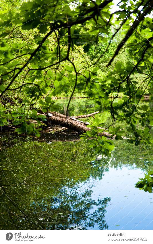 Schildkröten im Großen Tiergarten schildkröte berlin tiergarten großer tiergarten neozoen invasion invasive art biologische invasion invasive art einwanderung