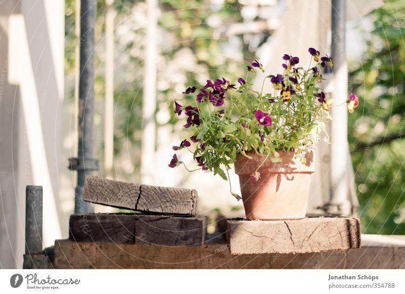 Gerüstverschönerung grün Pflanze Sommer Blume Blatt gelb Blüte Fröhlichkeit Baustelle violett Holzbrett bauen Gegenteil Blumentopf Grünpflanze verschönern