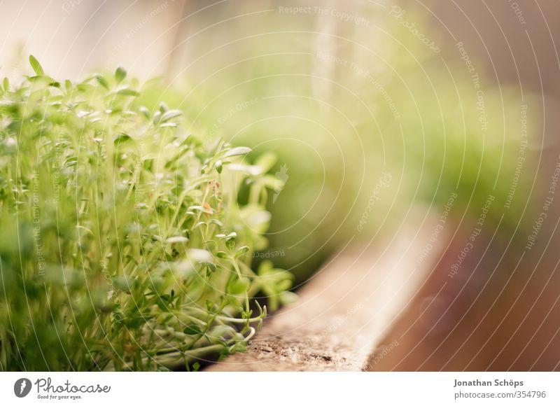 Kleingärtnerei Pflanze Grünpflanze ästhetisch Makroaufnahme grün Bioprodukte Fensterbrett Blumenkasten Farbfoto Außenaufnahme Nahaufnahme Detailaufnahme