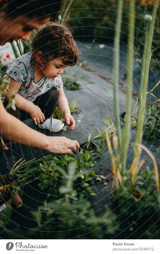 Mutter und Tochter bei der Gartenarbeit Tomate Bepflanzung Mutterschaft Kind Zusammensein Zusammengehörigkeitsgefühl Lifestyle Leben Familie & Verwandtschaft