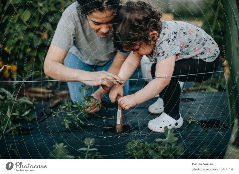 Mutter und Tochter bei der Gartenarbeit Mutterschaft Kind 18-30 Jahre 30-45 Jahre 1-3 Jahre Eltern 3-8 Jahre Außenaufnahme Frau Erwachsene