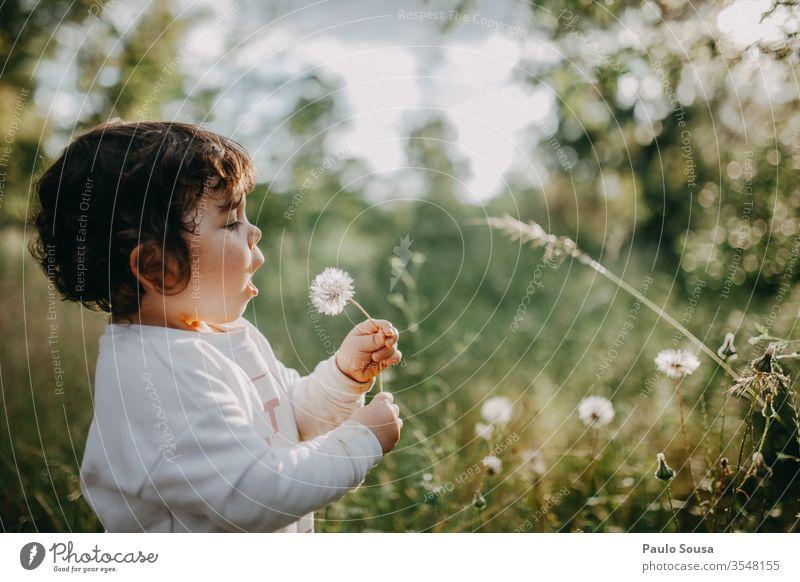 Kind bläst Löwenzahn Kindheit Natur Kaukasier Menschen 1-3 Jahre Farbfoto Kleinkind 3-8 Jahre Mädchen Porträt Fröhlichkeit Spielen Blick Außenaufnahme Lächeln