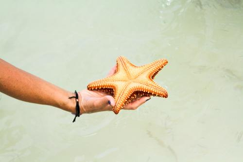 Hand hält einen Seestern auf dem Meer Meerwasser Wasser durchsichtig Armband Arme Halt offen Nägel blau übersichtlich Tod Schlachtung Sonne Stern Form