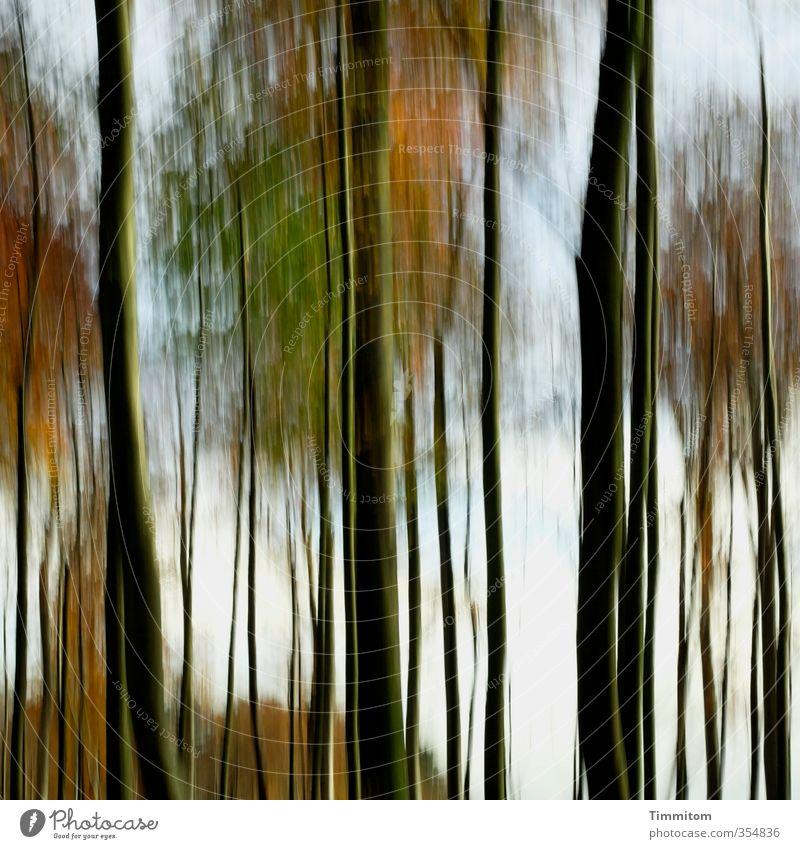 Hääbschdwald . Natur grün Baum schwarz Wald Umwelt Gefühle Herbst natürlich ästhetisch einfach herbstlich Herbstwald