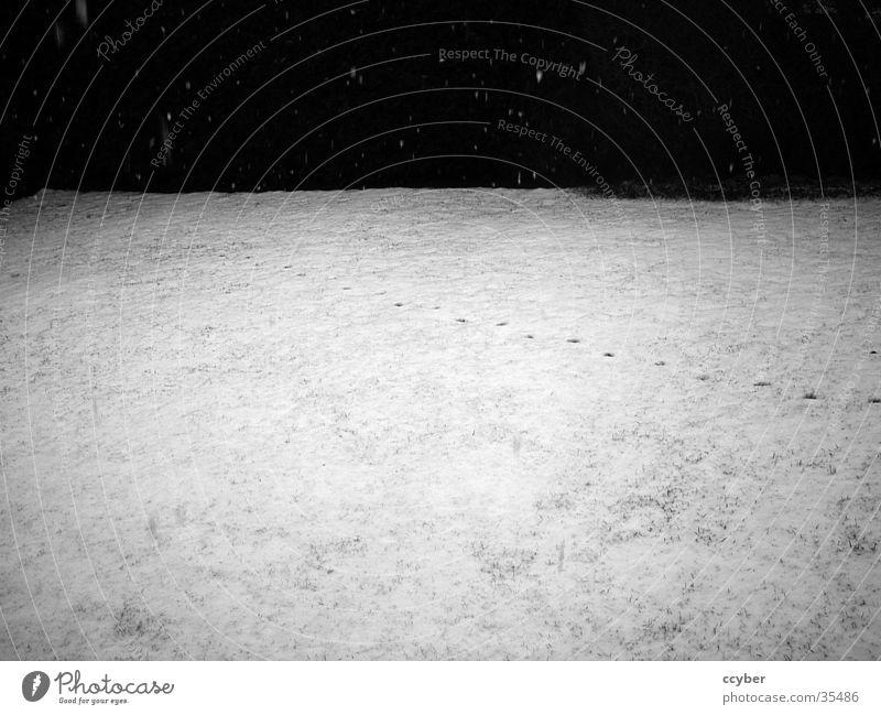 Spuren im Schnee weiß Winter schwarz kalt