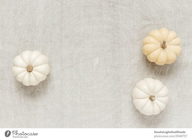 Weiße Baby Boo Kürbisse auf Leinwand Hintergrund weiß blass Textil Gewebe rustikal Textur Herbst Squash Baby Buh Gemüse fallen Farbe Saison saisonbedingt