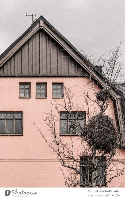 Riesiges Vogelnest vor einem rosa Haus Gebäude heimwärts Fenster Nest Storch groß riesig Baum Niederlassungen Wand Pastell Sahne beige Europa Europäer Stockholm