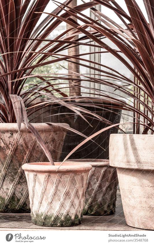 Zierpflanzen in rosa Tontöpfen Pflanze Pflanzen Zimmerpflanze Zimmerpflanzen Küchenkräuter Gras staubig-rosa Pastell Topf eingetopft moosbedeckt alt Flora