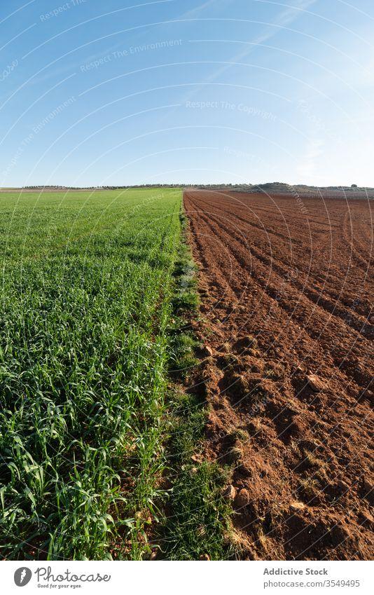 Landwirtschaftliches grünes und gepflügtes Feld Ackerbau Hälfte Pflanze pflügen Boden Blauer Himmel Landschaft ländlich sonnig Bauernhof Sonne Ackerland