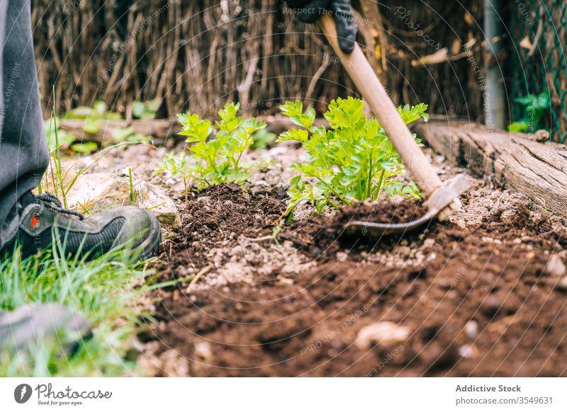 Matten im Garten auf den Boden gelegt mattock Ackerbau Werkzeug kultivieren hölzern Handgriff organisch Hobby Gerät Bauernhof Saison Arbeit Schmutz Metall
