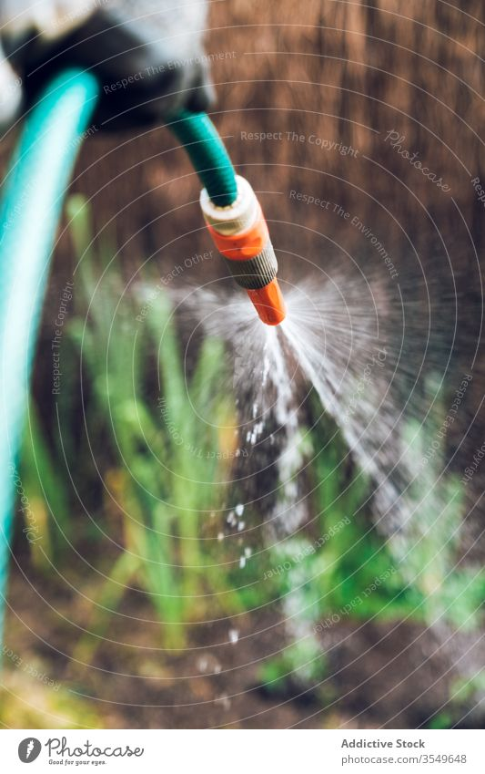 Erwachsener männlicher Gärtner gießt Pflanzen im Garten Mann Wasser Arbeit Landschaft Pflege Rasen Ackerbau Natur kultivieren Gras Botanik Saison Bauernhof