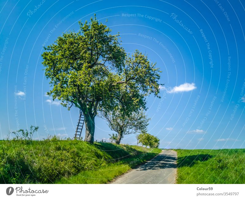 Leiter mit Baum im Frühling Laufmasche breit idyllisch Deutsch Landwirtschaft Straße Landschaft Anbaugebiet Nutzpflanze Horizont Sommer Wiese Natur Feld