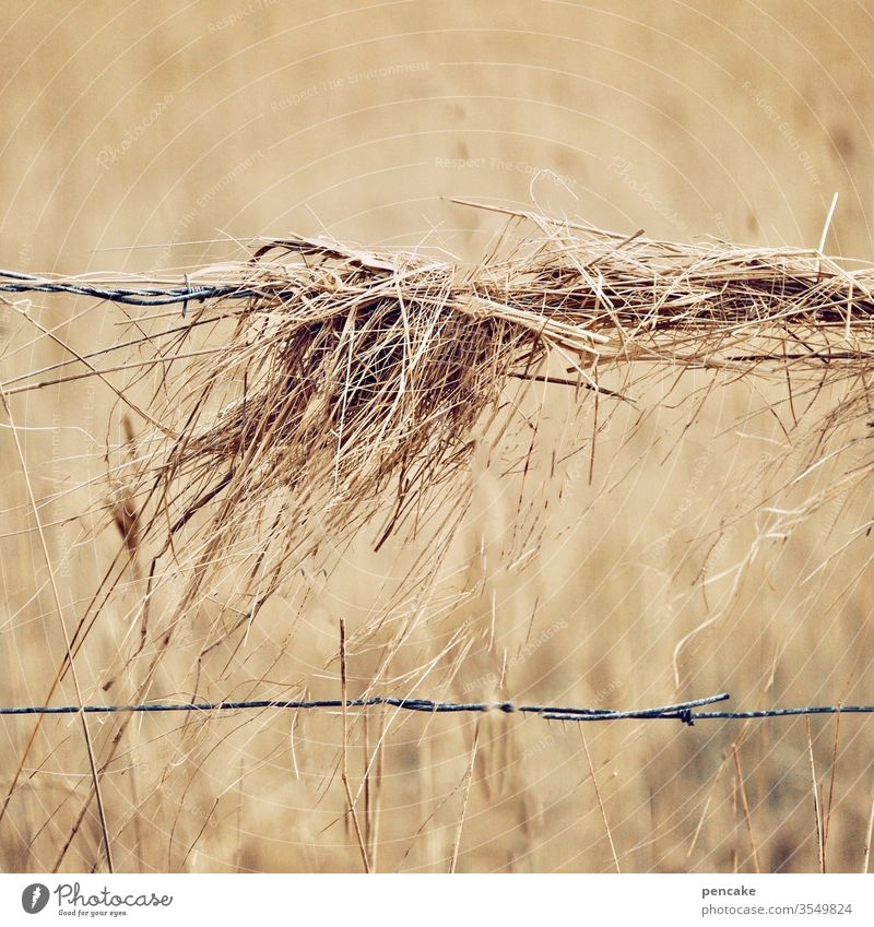 schwer auf draht! Heu Stroh feld Getreide Weide reif trocken Wind Draht hängen Herbst Sommer Zaun Stacheldraht Landwirtschaft