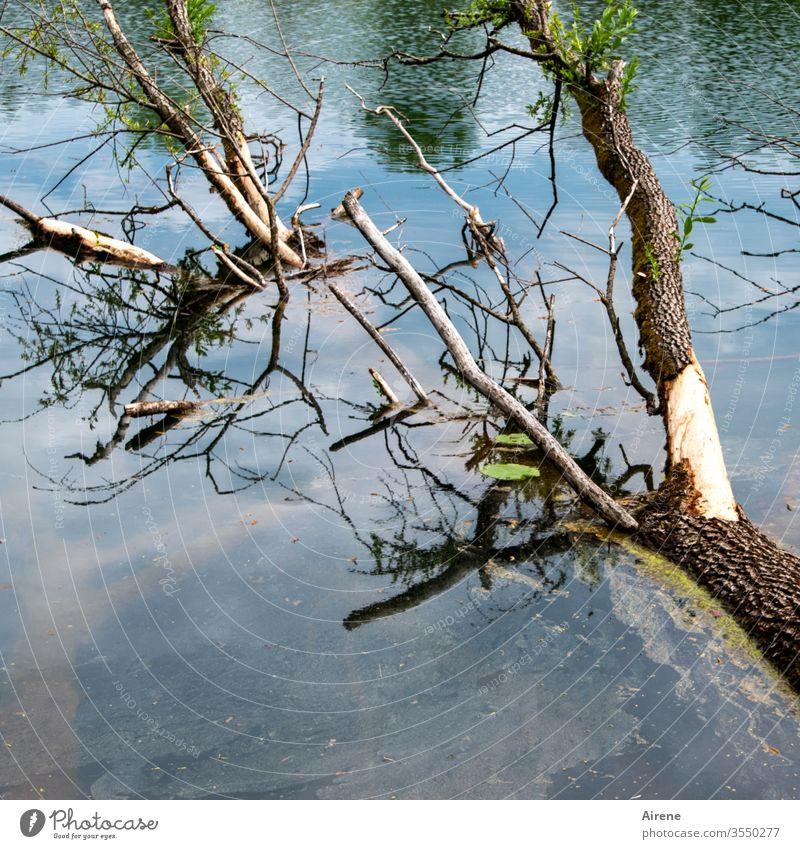 Waldsterben am Baggersee Baum Wasser blassblau Seeufer hell-blau weiß Geäst bizarr Zweige u. Äste Teich Urelemente alt Tod Untergang ertrinken untergehen