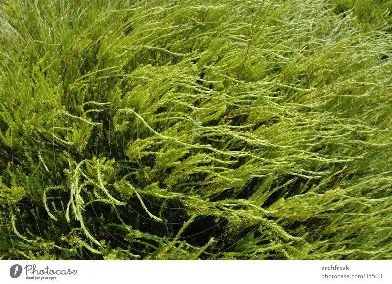 Grünes Meer Sonne grün Pflanze Garten träumen Wind weich tauchen Botanik Barcelona Verhext