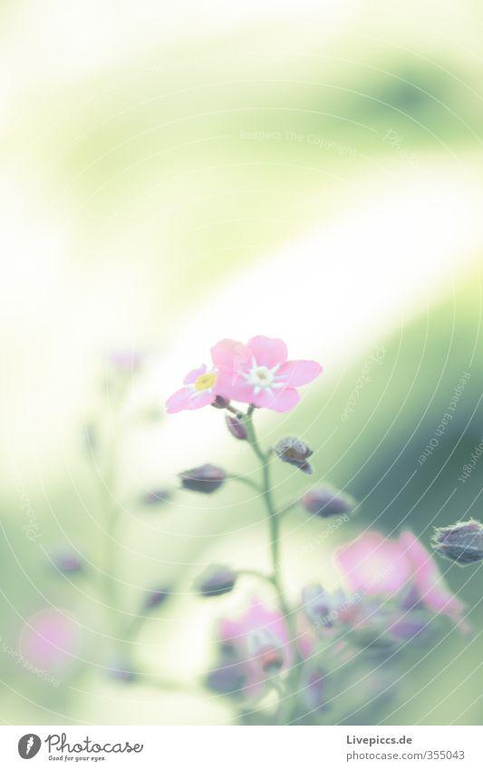 flower power Natur grün schön Pflanze Blume Blatt Umwelt Frühling klein Blüte Garten hell natürlich rosa Park leuchten