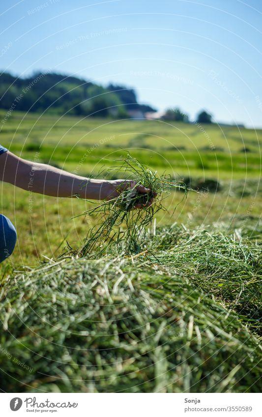 Bauer prüft frisch gemähtes Heu mit der Hand prüfen Gras Mann halten grün Landwirtschaft Farbfoto Feld Ernte Außenaufnahme Landschaft Tag Wiese natürlich
