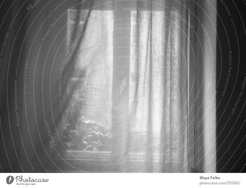 wind Menschenleer Fenster Stimmung Häusliches Leben Wind Vorhang Schnee Sehnsucht Haus Schwarzweißfoto Innenaufnahme Tag Zentralperspektive