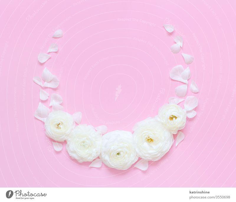 Kreisrahmen aus Hahnenfußblüten auf einem hellrosa Hintergrund kreisen Blume Rahmen Ranunculus Frühling romantisch Fuchsie Pastell flache Verlegung
