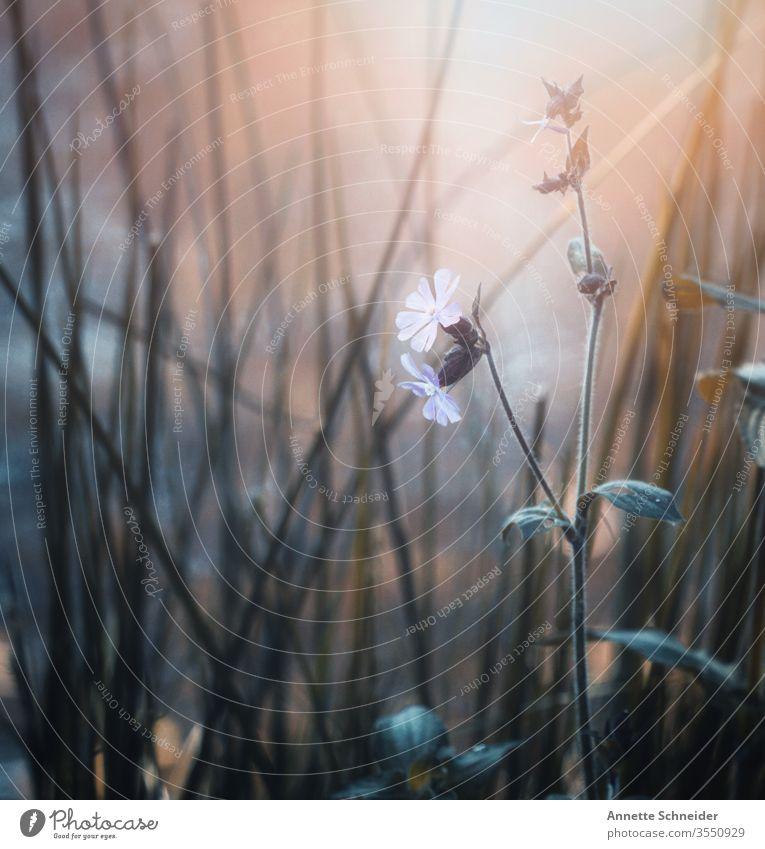 Auf der Wiese Nahaufnahme Blütenblatt Farbfoto Natur Frühling ästhetisch schön Hintergrund neutral Pflanze Blatt Blume